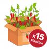 promo box peperoncini 15 piante