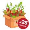 promo box peperoncini 25 piante
